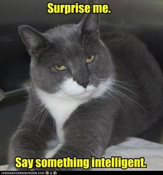 This looks like my beloved kitty, Zachary.  I miss him, but enjoyed him for 15 great years!