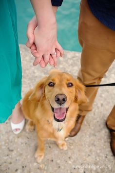 Downtown Chicago Engagement ring shot with a dog  | Phrene Exquisite Photography