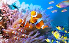 30 Pictures of Sea Animal with their Amazing Color Effect 9