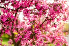 Three Ways to Capture Spring | Aly Dawn Photography
