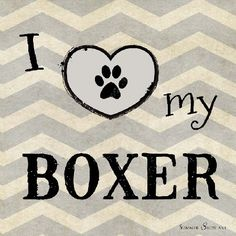 I Love My Boxer Dog by Summer Snow