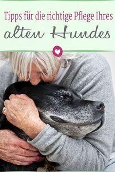 So pflegen Sie Ihren alten #hund am besten #tipps