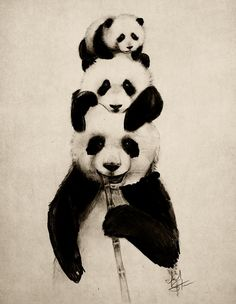 Pand-erations by IsaiahStephens #AnimalArt #Panda #art