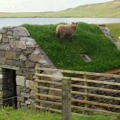 Rooftop on the Shetlands of Scotland