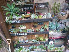 小さな庭の画像 by ikuraさん | 小さな庭と多肉植物とリメ缶とコンクリート鉢とサビサビ雑貨とリメ鉢と雑貨と秘密基地と多肉棚とハンドメイドフェス