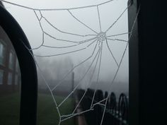 Frozen Spiders Webs