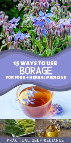 15 Ways to Use Borage for Food, Herbal Medicine, & Homemade Body Care - Borage is a beautiful annual flower that's popular with gardeners and is edible and medicinal. These edible flowers have a number of uses in the kitchen, homemade herbal tea recipes, homemade soap, and borage oil can be made and used for its skin benefits. Healing Herbs, Medicinal Herbs, Herbal Remedies, Natural Remedies, Homemade Body Care, Borage Oil, Herbs For Health, Herb Recipes, Annual Flowers