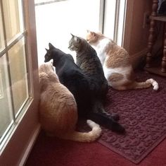 Synchronicity minus one. Submitted by: Carol Empet #catlife #whatcatsdo #catsoftheday #synchronicity #saturdayvibes #caturday #catlady #catlover #pawfection #catsrule #catblogger
