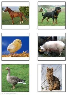 WORD TO PICTURE MATCH. Farm Animals