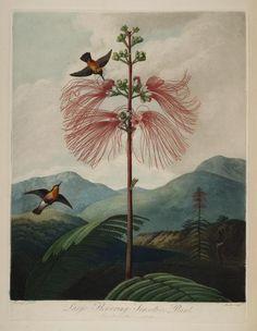 New illustration of the sexual system of Carolus von Linnaeus - Biodiversity Heritage Library