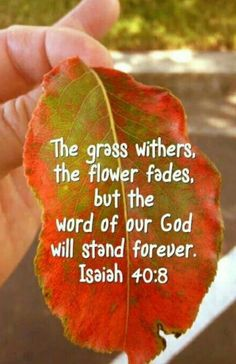 """wiirocku: """"Isaiah (NKJV) - The grass withers, the flower fades, But the word of our God stands forever. Biblical Quotes, Spiritual Quotes, Bible Quotes, Spiritual Encouragement, Jesus Quotes, Scripture Verses, Bible Scriptures, Christian Life, Christian Quotes"""