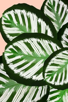 Botanicalart by dancelstudio /Danii Pollehn