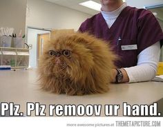 I really don't like you, vet…