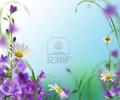 blue campanulas with daisywheel on white and blue background