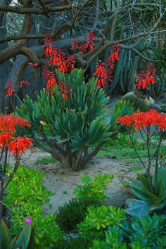 4 Family-Friendly San Diego Gardens Full of Landscaping Ideas & Inspiration