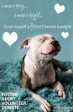 Adopt a pet. Save a life.