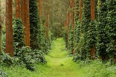 Coffee Plantation of Coorg Coffee Type, Modern City, Karnataka, Heritage Site, National Parks, Wildlife, Country Roads, Cold Brew, Amazing