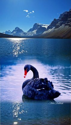 New Ideas White Bird Flying Animals Beautiful Swan, Beautiful Birds, Beautiful Images, Animals Beautiful, Cute Animals, Funny Bird Pictures, Nature Pictures, Swans, Funny Birds