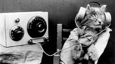 Cat music is produced - may help with cat shelters : environment, animals, culture, music, society