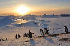ENTREVISTA/ La verdadera marcha de los pingüinos