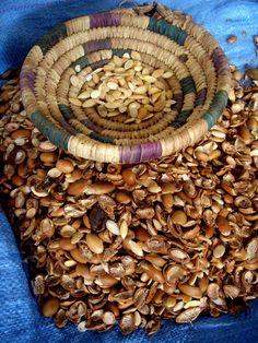 Cracked argan nuts KENZA Pure Argan Oil