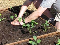 Cool-Weather Vegetable Gardening in Raised Beds   Greenland Garden Raised Bed Gardens
