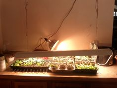 A Guide to Starting Seeds under Lights! | Living the Rustic Life