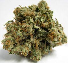 Washington State residents - You can still buy Medical Marijuana online! Visit www.yourcannabiswashington.com today!