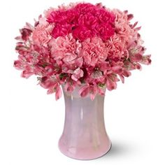 Carnations flowers for Anniversary. Deliver these exquisite two dozen of Pink Carnations and 3 stems Astromeria with vase to your wife.
