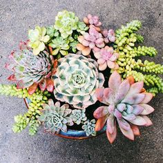 Beautiful arrangement by @RootedInMoss x #SuckerForSucculents