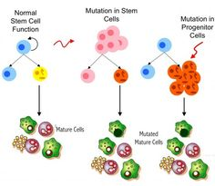 Stem Cells, the Role of the Immune System & Medical Uses