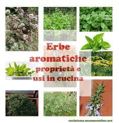 Erbe aromatiche, proprietà e usi in cucina con tantissime ricette