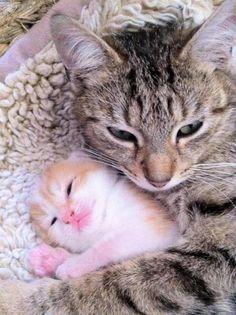 Nada como el amor de una madre.- Animales Adorables