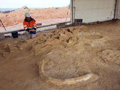 Huesos de mamut hallados en Changis-sur-Marne, Francia