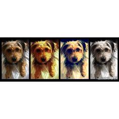 Puppy love <3