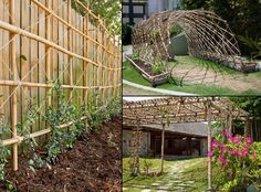 Renewable, durable and beautiful, the versatility of bamboo continues.    Here are great examples of how you can use bamboo to build a trellis.    We have a lot more gardening ideas at http://theownerbuildernetwork.com.au/gardening-ideas/