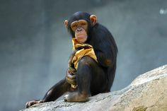 Chimp BABY BLANKET