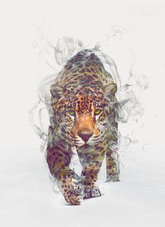 Poster | LEOPARD von Dániel Taylor | more posters at http://moreposter.de