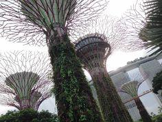 Marina Bay Sands: top Singapore celebrity restaurants! Waku Ghin, David Myers Adrift, Cloud Forest gardens.