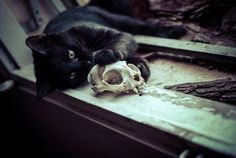 cat Black and White MY EDIT skull Macabre Black Cat cat skull Black Cat Aesthetic, Witch Aesthetic, Slytherin, Celtic, Yennefer Of Vengerberg, Cat Skull, Southern Gothic, Season Of The Witch, Necromancer