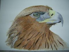 The Eagle Eye by Alan Webb - Beautiful watercolor work!