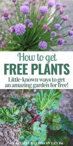 Don't pay a fortune for your garden! You can get SO many amazing plants for FREE. Fall is the perfect time to transplant! #frugalgardening #gardeningtips #frugal #perennialplants