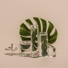 Perspectiva - Comidas e plantas distorcidas através de vidros e água na fotografia de Suzanne Saroff