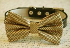 Gold Bow Tie attached to black leather collar Chic by LADogStore, $29.99 #Gold #GoldWedding #GoldEverything #GoldAccessory #GoldGifts #GoldBowTie #Wedding #UniqueWedding #LADogStore #LA #Dog #Store #Shop #Buy #Pet #Animal #Stuff #Accessory #Accessories #Gifts #Gift #Everything #weddingIdeas #Ideas #Cute #Pretty #Amazing #DogCollar #Collar #BowTie #Bow #Tie #BlackCollar