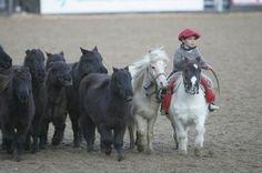 a little gaucho with mini horse tropilla, so cute! Tiny Horses, Horses And Dogs, Cute Horses, Horse Love, All The Pretty Horses, Beautiful Horses, Animals Beautiful, Animals For Kids, Animals And Pets