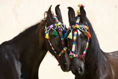 """by Christiane Slawik. The horses kind of look like """"what the heck is on my face"""""""