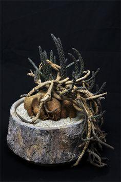 黒竜      Pterocactus tuberosus