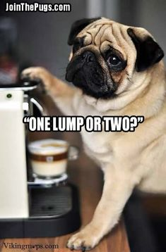 Have you been working like a dog? - Our latest Pug Post newsletter is here!