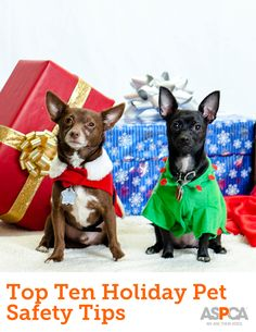 244 best christmas with critters images on pinterest dog cat top ten holiday dangers for pets what you should know m4hsunfo
