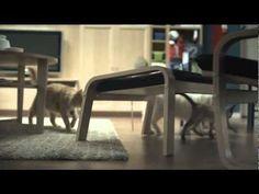 IKEA Happy Inside Cats Advert **NEW**